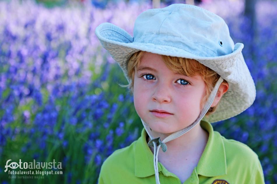 Ojos azules sobre campo malva. Fotografía creativa - Fotografía decorativa - fotografía infantil