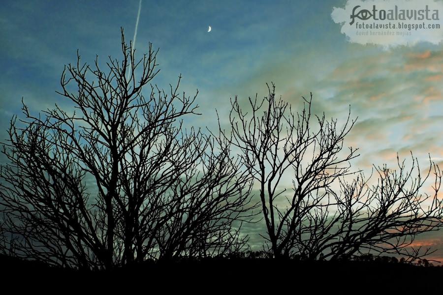 Luna creciente, bosque menguante