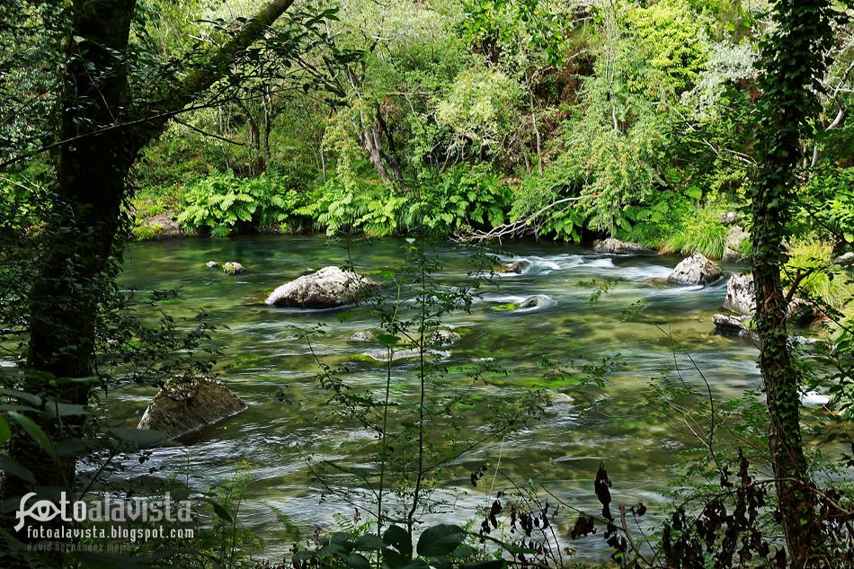 El río del bosque encantado. Fotografía creativa - Fotografía decorativa