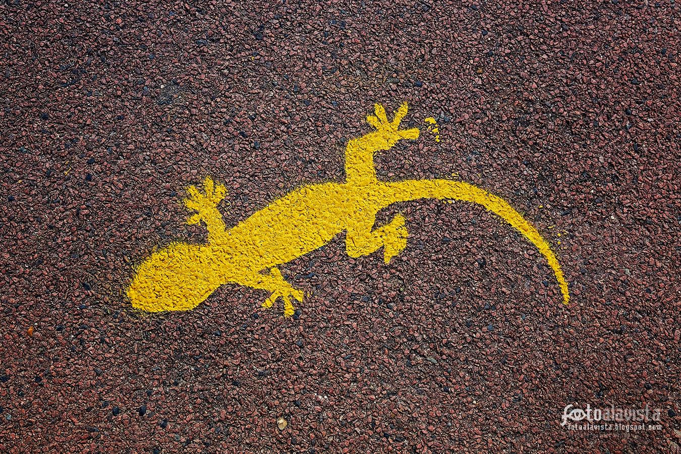 Atención salamandras - Fotografía