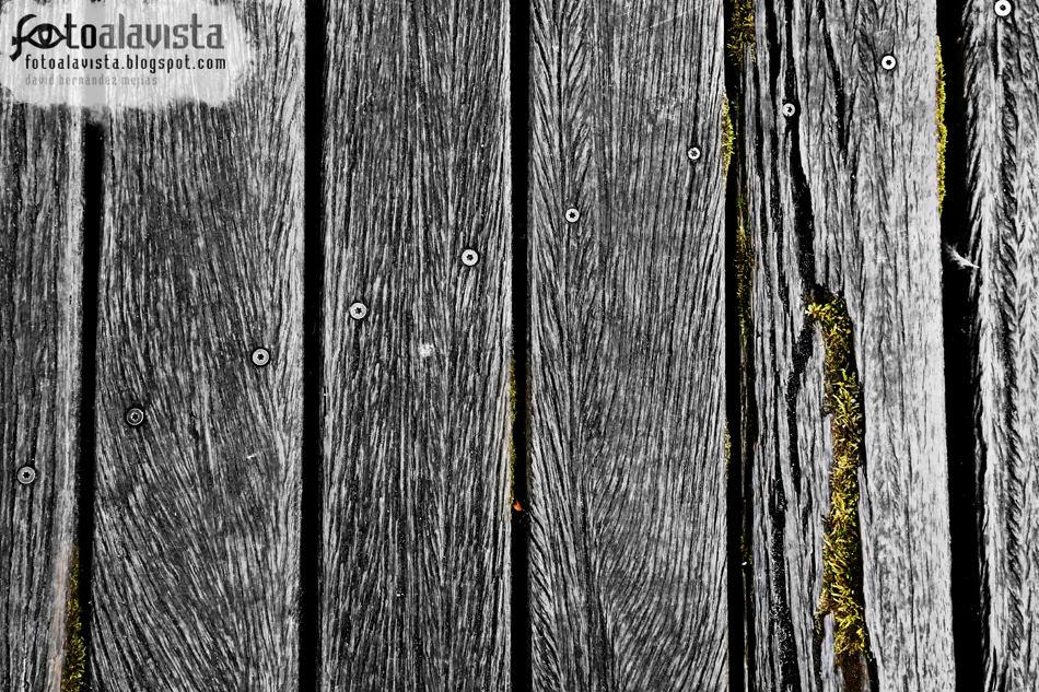 Tornillos y musgo en la madera