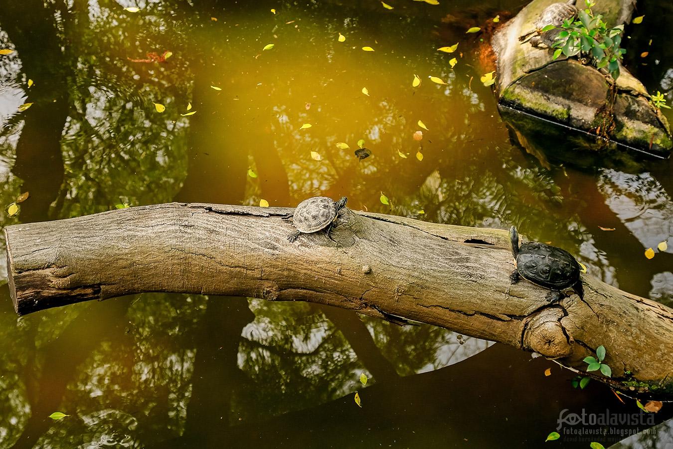 Tortugas de fábula- Fotografía