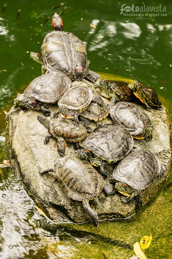 Formación de tortuga - Fotografía artística
