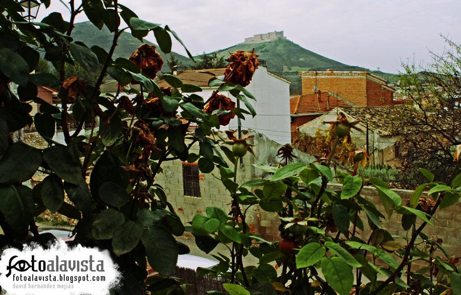 El castillo tras el rosal