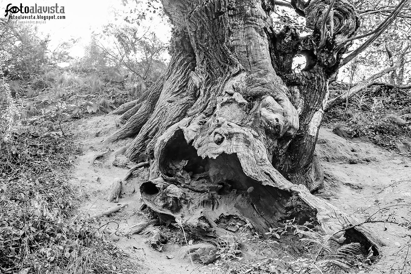 Hallando múltiples formas en este viejo tronco - Fotografía artística